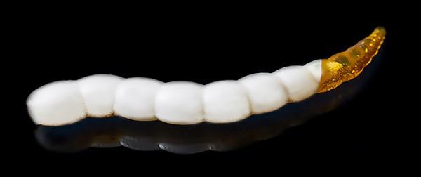Jara Bufworm 65 - Color #217